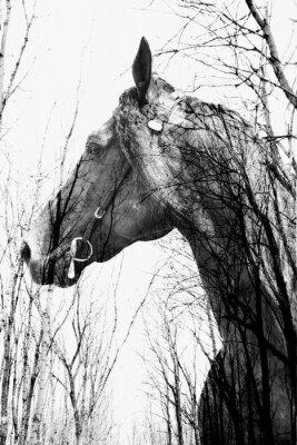 Fototapeta Les uvnitř kůň ina umění, multiexposition