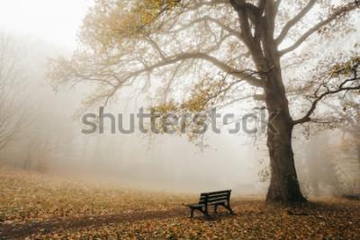 Fototapeta Les v podzimní náladě s mlhou a sluncem