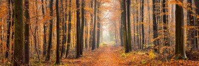 Fototapeta Lesní panorama na podzim