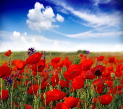 Fototapeta Letní květy