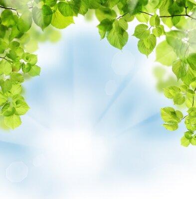 Fototapeta Letní listy na květinové zeleně pozadí