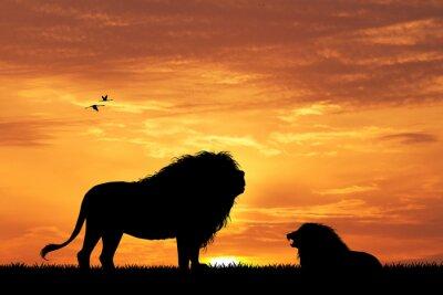 Fototapeta lev silueta při západu slunce