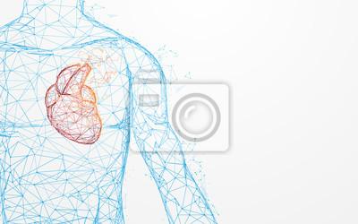 Fototapeta Lidská anatomie srdce tvoří linie a trojúhelníky, spojuje síť na modrém pozadí. Ilustrační vektor