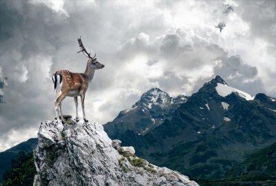 Fototapeta Lonely Deer