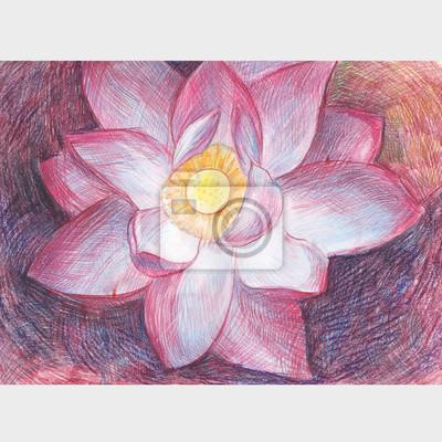 Lotosovy Kvet Vykres S Barevnym Pencils Pale Ruzovy Kvet