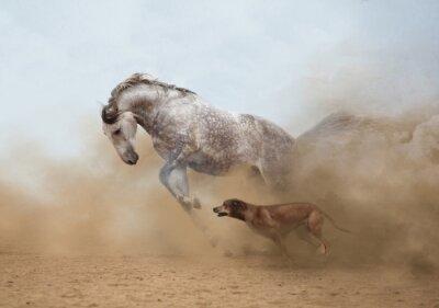 Fototapeta Lusitanian kůň