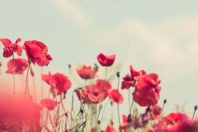 Fototapeta Mák květiny retro klidný letní pozadí