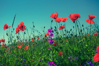 Fototapeta Máku květy proti obloze