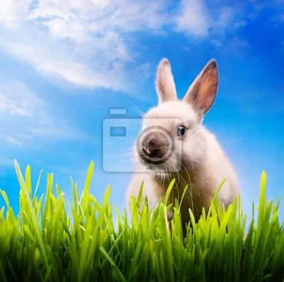 Malý velikonoční zajíček na zelené trávě