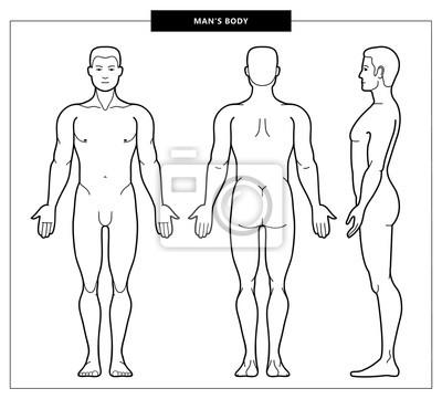 Fototapeta men's body and anatomy