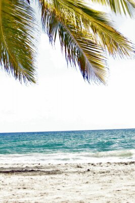 Fototapeta Mer, antilles, caraibes, tropiques ...