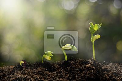 Fototapeta Mladé rostliny rostoucí v ranním světle a zelené bokeh backgro