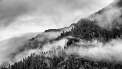 Fototapeta mlha na vrcholu hory s borovicemi