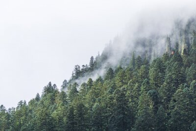 Fototapeta mlha nad lese ve večerních hodinách.