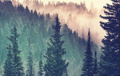 Fototapeta Mlha v lese