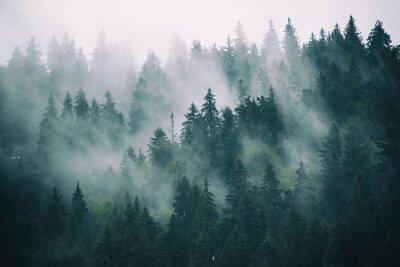 Fototapeta Mlhavá krajina s jedlemi lesem v retro stylu