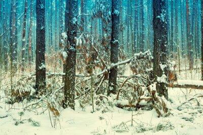 Fototapeta Mlhavé borového lesa pokryté první sníh