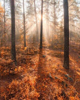 Fototapeta Mlhavé ráno sluneční světlo les