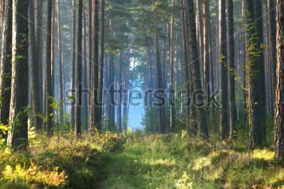 Fototapeta Mlhavé svítání v listnatém přečetlo v Lotyšsku.