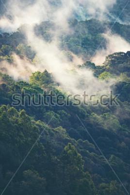 Fototapeta Mlhý les v tropických
