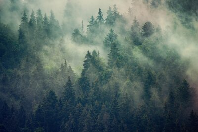 Fototapeta Mlžná krajina s jedlemi lesem v retro stylu