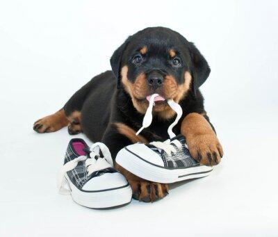 Fototapeta Moje boty!