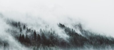 Fototapeta Moody forest landscape with fog and mist