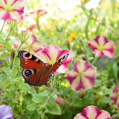 Fototapeta motýl 186