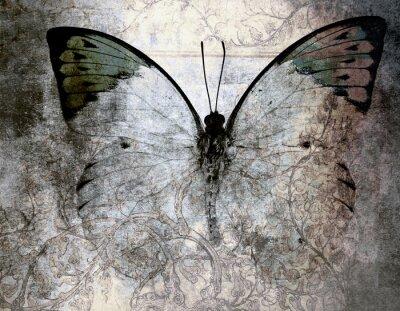 Fototapeta motýl
