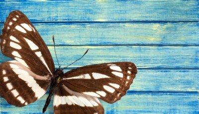 Fototapeta Motýl.