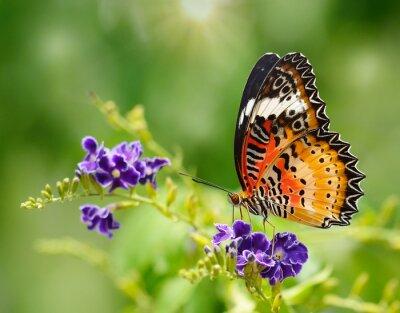 Fototapeta Motýl na fialový květ