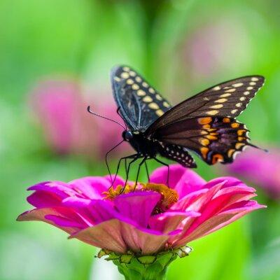 Fototapeta Motýl na květině