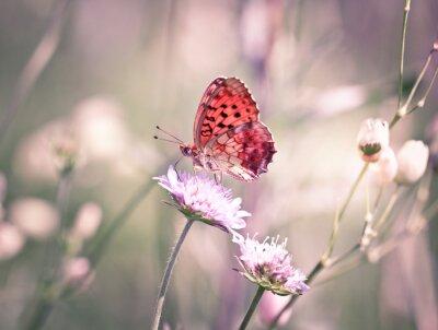 Fototapeta Motýl na kvítek