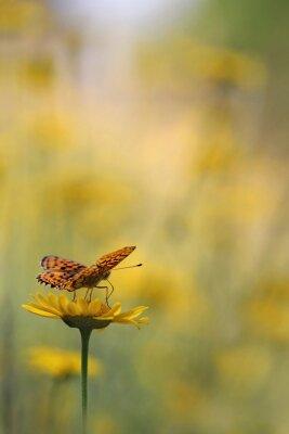 Fototapeta Motýl v zahradě