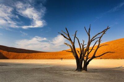 Fototapeta Mrtvý strom v Sossusvlei v Namib Desert, Namibie