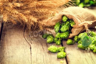 Fototapeta Naskočte do vaku a pšenice uši na dřevěné popraskané staré tabulky. Pivovar koncept. Přísada pro vaření piva. Krása čerstvě vybral chmelové hlávky a pšenice detailní. Pytel chmele a svazek pšenice na