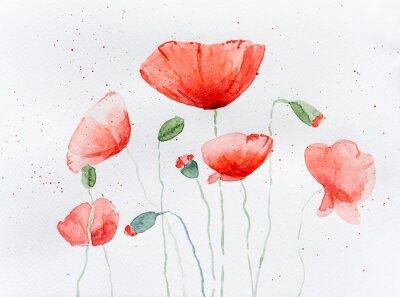 Fototapeta Natural drawing of poppy flowers