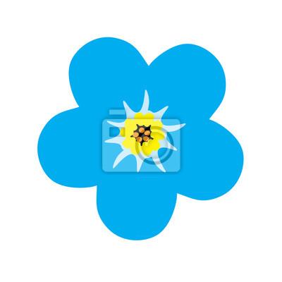 ee475c6b99f Fototapeta Nezapomeň na mě květina květ. Modrý květ. vektorové ilustrace