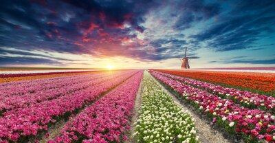 Fototapeta Nizozemí