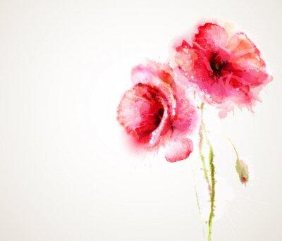 Fototapeta Obě rostliny červené vlčí máky. Pozdrav-karta.
