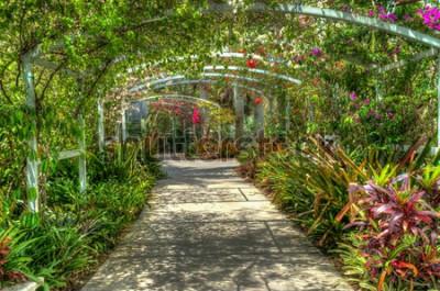Fototapeta Oblouk pokrytý zářivými barevnými květinami v botanické zahradě v Neapoli FL