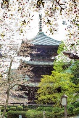 Fototapeta Obrázek krásné sakury seasnon v Kjótu, Japonsko