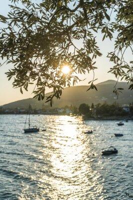 Fototapeta Olivovníky, moře a západ slunce