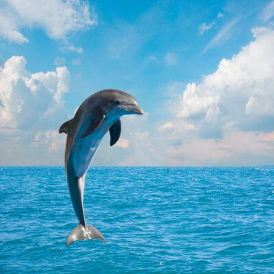 Fototapeta one jumping dolphins