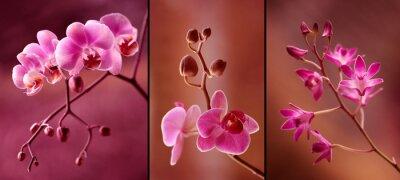 Fototapeta Orchidea tryptyk w fioletach