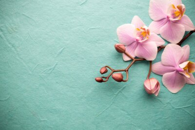 Fototapeta Orchidej.