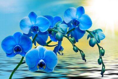 Fototapeta Orchidej květina zblízka