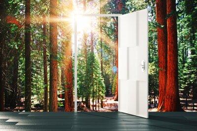 Fototapeta Otevřené dveře na slunné lesní koncepce