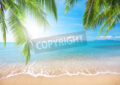 Fototapeta Palm a tropická pláž