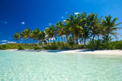 Fototapeta Palm a tropické pláže